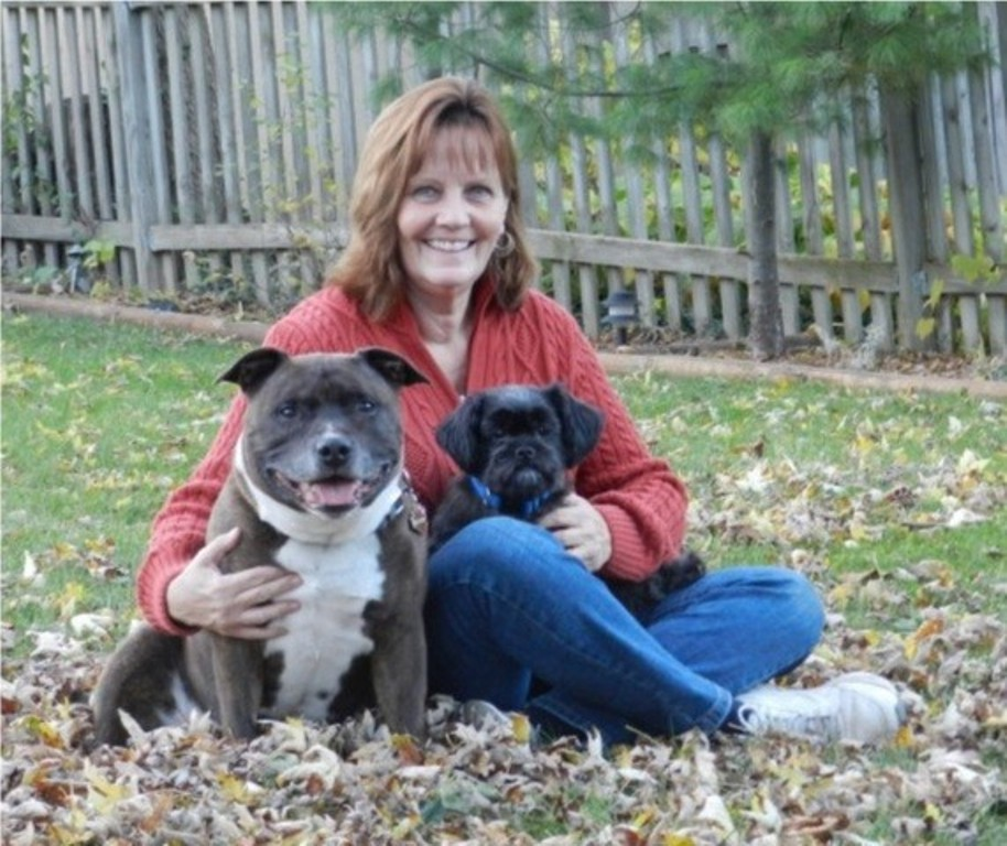 Comfort paws servicing glen ellyn and wheaton